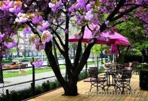 Сад отеля Okura в Амстердаме
