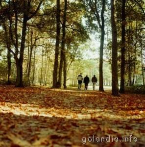 Парк в Тилбурге