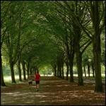 Амстердамский лес – одна из достопримечательностей Нидерландов