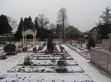 Ботанический сад. Лейден