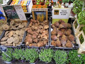 Цветочный рынок Блюменмаркт. Амстердам