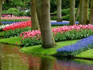 Нидерландский парк Кёкенхоф заработает с 21 марта